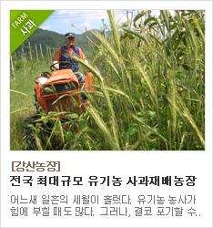 전국 최대규모 유기농 사과재배 강산농장