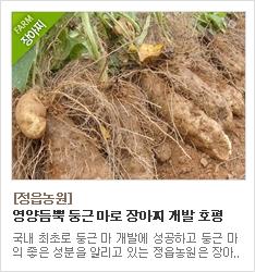 국내 최초 둥근마 개발에 성공한 정읍농원