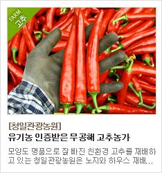 유기농 인증을 받은 고추를 생산하는 청일관광농원