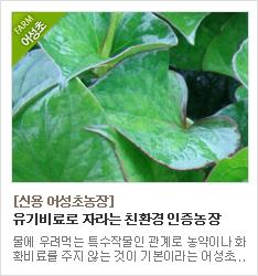 친환경 유기농 인증 농장 신용어성초