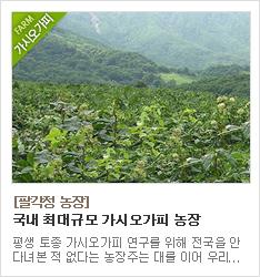 국내 최대 가시오가피 전문 농장 팔각정 농장