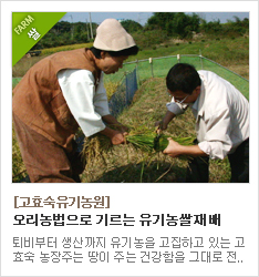 오리농법으로 유기농쌀을 재배하는 고효숙유기농원