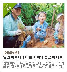 마,둥근마,마가공식품,국내최초 재배성공,정읍농원